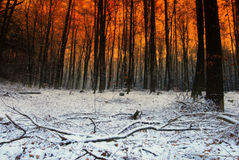 Snow and sundown Royalty Free Stock Images