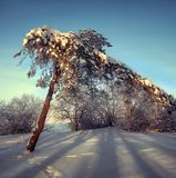 Silver frost on the trees on a sunny day in winter Royalty Free Stock Images