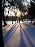 After Snow sunset. Ning sunset reflection against the tree in the snow Royalty Free Stock Image
