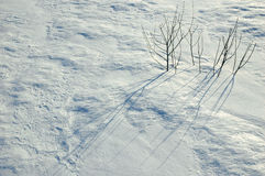 Snow surface with twigs Stock Photos