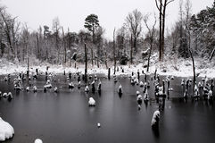 Snow Swamp Stock Image