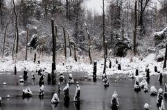 Snow Swamp Stock Photos