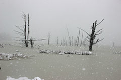 Snow at the Swamp. Snow storm at the swamp Stock Photography