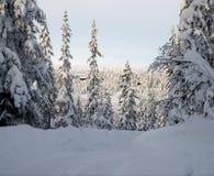 Beskåda till och med vinterskog Arkivbild