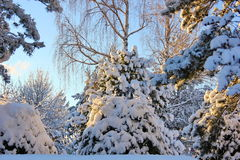 Snow tale Stock Photo