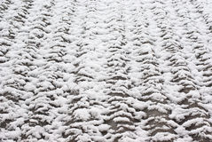 Snow texture Stock Photography