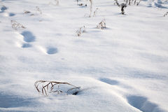 Snow texture with foot prints Stock Photography