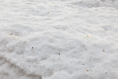 Snow texture on the ground with dust and leaves in Hokkaido, Japan royalty free stock images