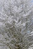 Snow texture on tree branches  in countryside near Hausen, Germa Stock Image