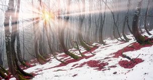 Snow thawed about beeches Stock Photo
