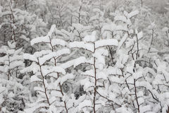 The snow Royalty Free Stock Photography