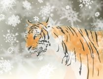 Snow tiger Royalty Free Stock Photo