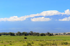 Snow on top of Mount Kilimanjaro Royalty Free Stock Photography