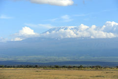 Snow on top of Mount Kilimanjaro Royalty Free Stock Images