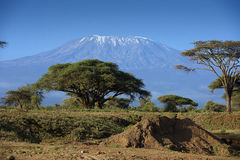 Snow on top of Mount Kilimanjaro in Amboseli Stock Photos