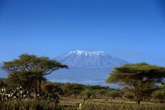 Snow on top of Mount Kilimanjaro in Amboseli Royalty Free Stock Image
