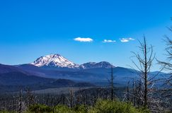 Snow topped peak of beautiful Mt Shasta in Northwestern US with burned tree trunks in the foreground stock photography