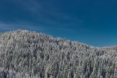 Snow topped trees and blue sky. Fresh snow on spruces, ridgeline looks like a wave. Taken near Modriach, Austria Stock Image