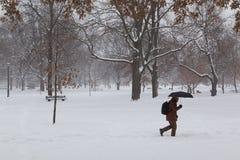 Snow in Toronto Royalty Free Stock Image