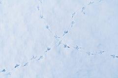 Snow tracks Stock Image