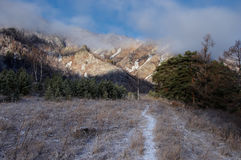 Snow trail through frozen morning field with rime grass among the pines in the Altai Mountains Stock Image
