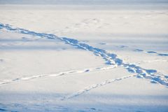 Snow Trails Royalty Free Stock Photography