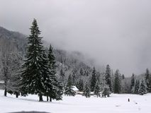 Snow tree. Landscape - snow tree and a isolated couple; happy and beautiful Stock Photo