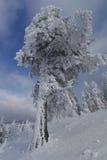 Snow tree Royalty Free Stock Photography