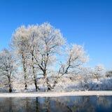 Snow tree Stock Images