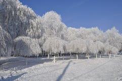 Snow tree Royalty Free Stock Photo