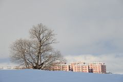 Snow and Tree. It is all white snow and tree Royalty Free Stock Photography