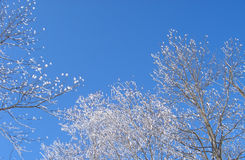 Snow tree. And sky stock images