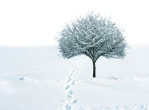 Snow and tree Royalty Free Stock Photo