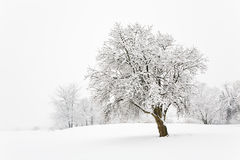 Snow tree Stock Images