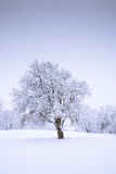 Snow tree Royalty Free Stock Image