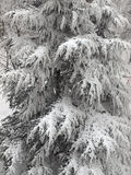Snow tree. Tree under the snow in park Stock Photo