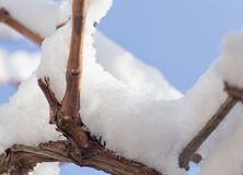 Snow on the tree against the blue sky.  Royalty Free Stock Images