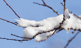 Snow on the tree against the blue sky.  Stock Image