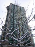 Snow Tree Against Building. A snow tree in front of a highrise building stock photography