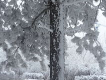 Snow tree. The tree all covered with snow Stock Photos