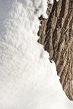 Snow and tree bark texture Royalty Free Stock Photos