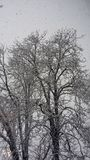 Snow tree. Magic morning with a lot of snow royalty free stock photography