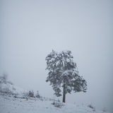 Snow on tree Royalty Free Stock Photography