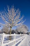 Snow , tree and blue sky Royalty Free Stock Images