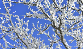 Snow tree on blue sky Stock Image