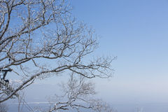 Snow on tree branch Royalty Free Stock Images