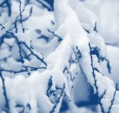 Snow on the tree branches. Royalty Free Stock Photos