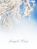 Snow on tree branches Stock Images