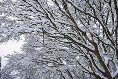 Snow on tree branches royalty free stock photo