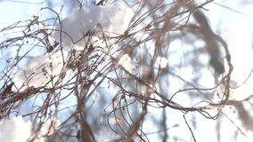 Snow and tree branches. stock video footage